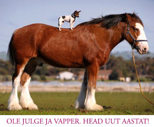 Head hobuseaastat!