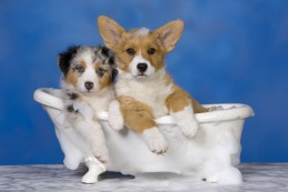 SPAde ja veekeskuste hotellid, kuhu oled oodatud koos koeraga