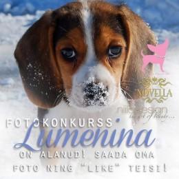 """Fotokonkurss """"Lumenina"""""""